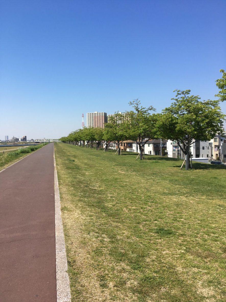 江戸川 河津桜