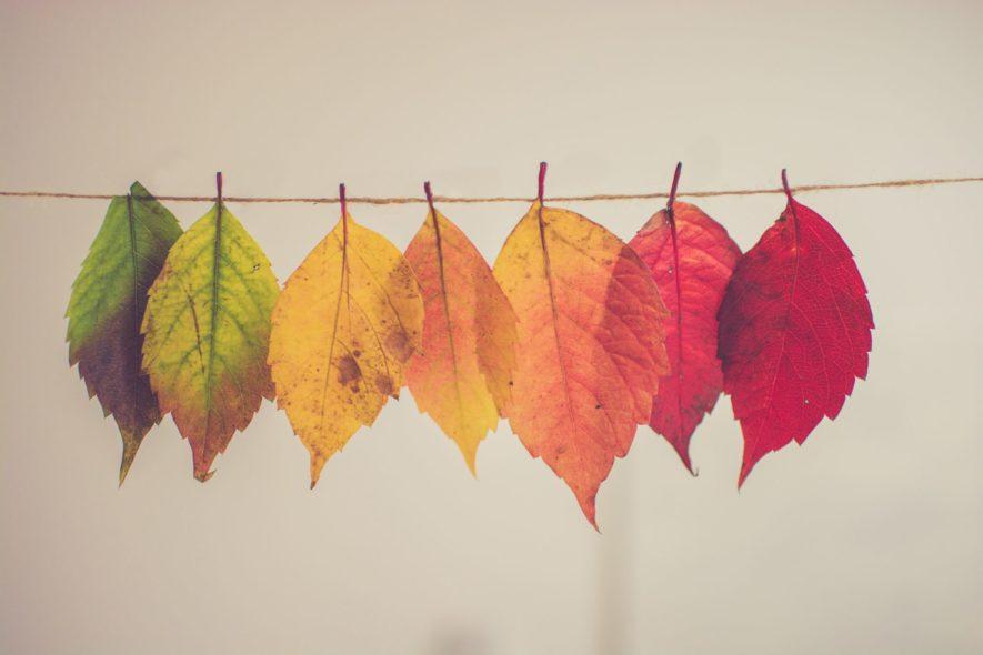 【まとめ】変化することで収穫があり、成長できる