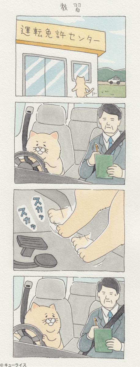 ネコノヒー1巻