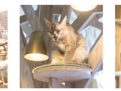 猫カフェモカ