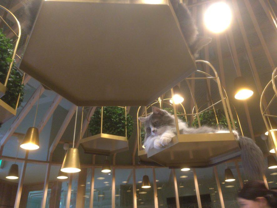 猫カフェ<strong srcset=