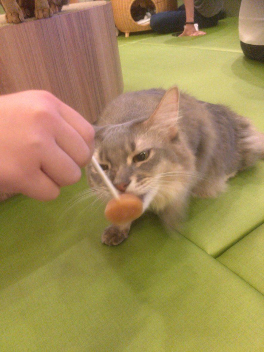 猫カフェ・モカ(MOCHA)